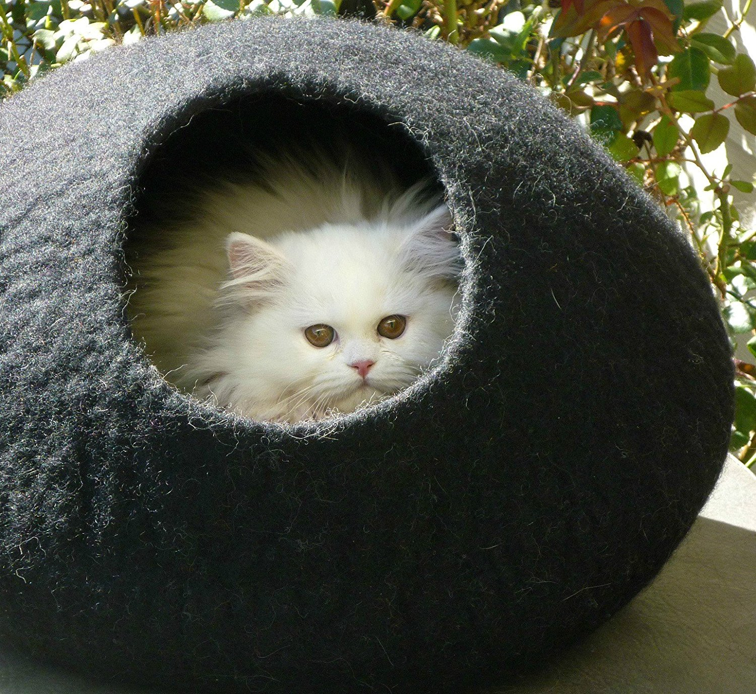 Cat Caves