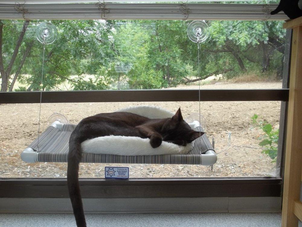 Kitty Cot Quot World S Best Cat Perch Quot Cat Padz