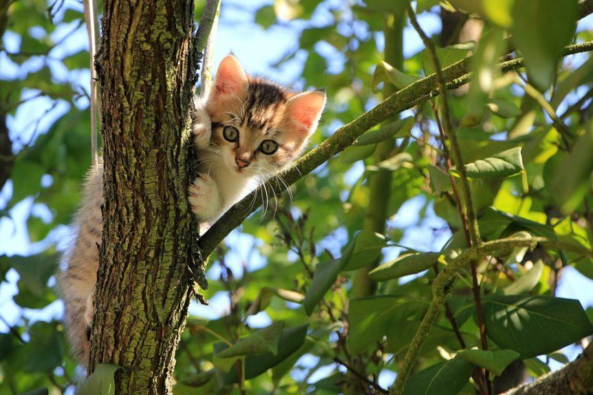 Cat tree that looks like a tree